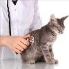 Ветеринарные клиники в Вычегодском